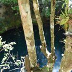 Ruta de los Cenotes, the Cenote Trail