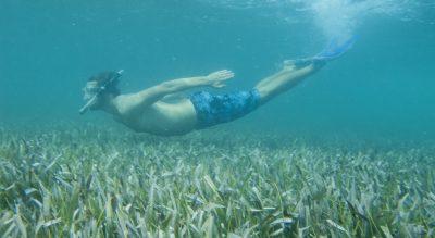 Snorkel en el mar o en cenotes