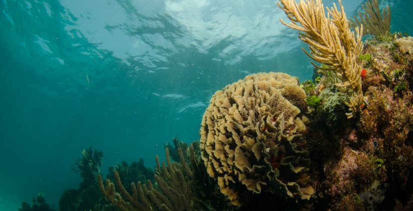 10 Actions to reduce White Syndrome in reefs